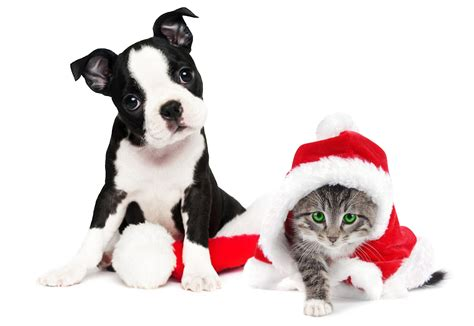 imagenes feliz navidad con perros soy tu mascota