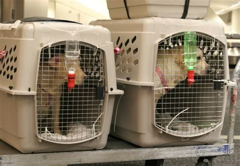 is taking your pet on an airplane worth the risk travel smithsonian