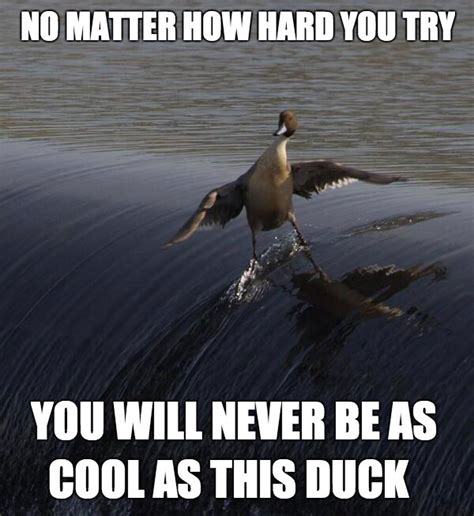 Duck Memes - you will never be as cool as this duck weknowmemes