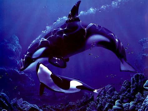 Orca Background Check Orca Wallpaper Wallpaper Ideas