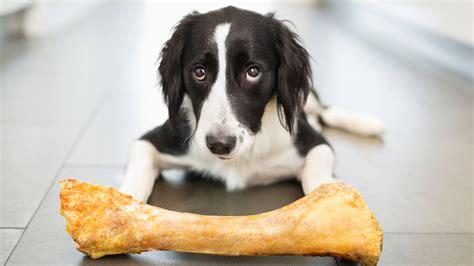fda bones bone treats could kill your fda warns