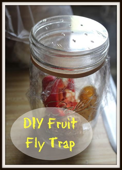 fruit fly trap diy diy fruit fly trap family table tuesday 11 revived
