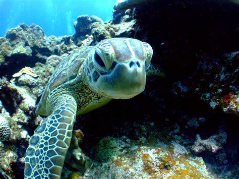 ferry xiaoliuqiu diving events scuba shop taipei xiaoliuqiu island trip