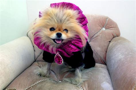ziggy on real housewives of beverly hills outfits giggy vanderpump is a never nude on real housewives of