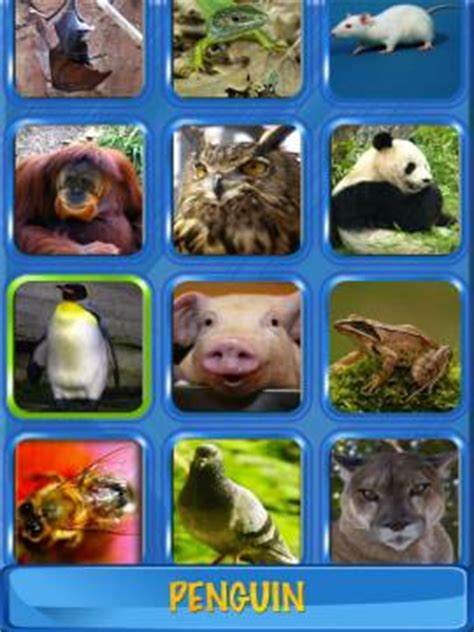 musical flash cards animals images sounds  words  kids hd review  app  iphone ipad