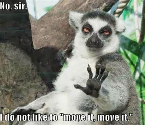 Lemur I Like To Move It Move It by No Sir I Don T Like To Move It Move It Giantgag