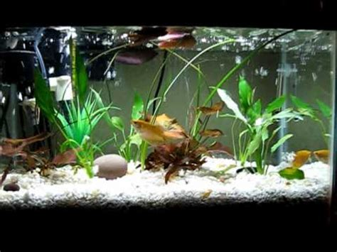 membuat filter aquarium dari pvc diy my aquarium with filtration under gravel for crystal