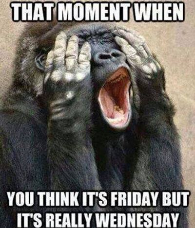 Adult Friday Memes - funny monkey friday moment funny pinterest funny