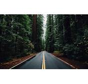 Nature Forest Trees Road Wallpapers HD / Desktop And
