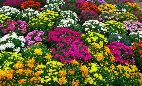 Fall Flower Gardening Fall Flower Pictures Beautiful Flowers