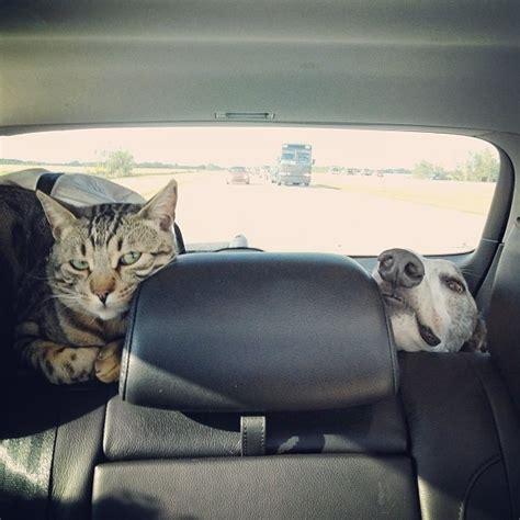 möbel walther borys il gatto bengala e walter il levriero sono gli amici