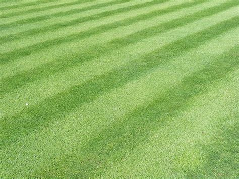 how to put stripes in your lawn when you cut the grass favething com