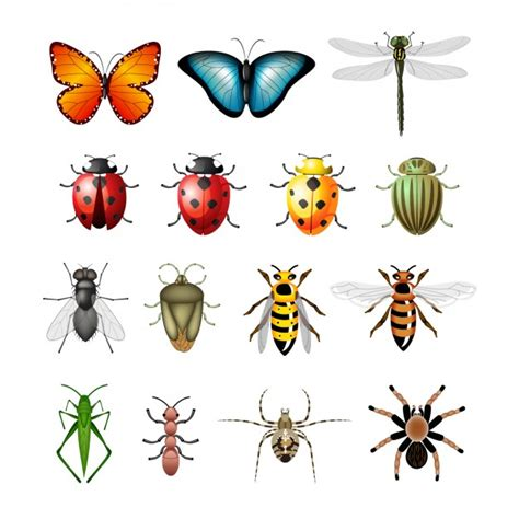 insectanatomy free insect animal pictures gallery insect vectors photos and psd files free download