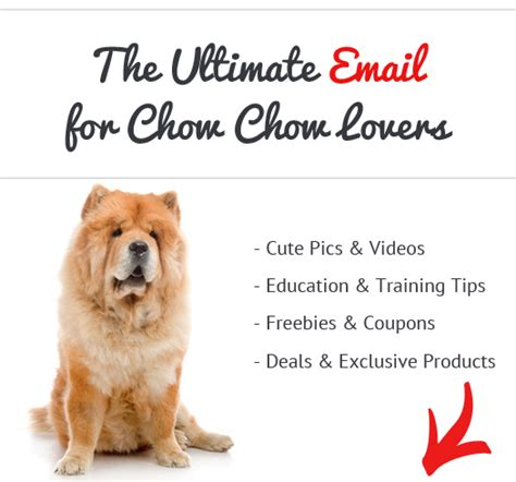 Do Chows Shed by Chow Chow News Stories Pictures Products Chow Chows Home