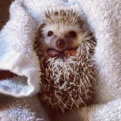 Why Do They Say Love Is Blind These 30 Cute Hedgehogs Will Kill You With Cuteness