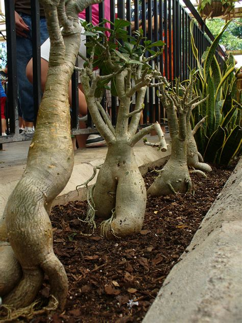 Bad Luck Superstitions superstition mandrake root science what folk believe