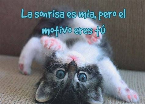 imagenes de ojos tiernos 17 best images about im 225 genes de gatitos tiernos on