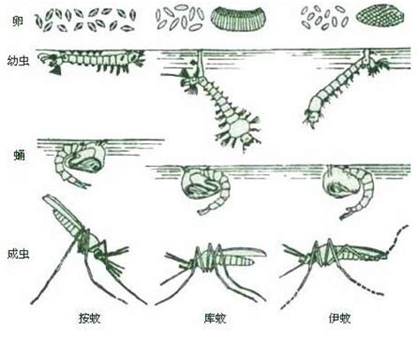 1000 images about mosquito on pinterest mosquito trap