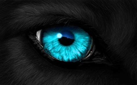 wolf eye color open woods wolf pack open