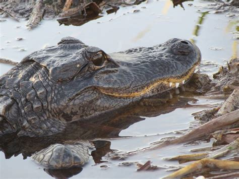 airboat rides fort lauderdale everglades airboat rides fort lauderdale tours ride