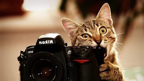 chat camara a camara cat nikon camera animals biting wallpapers hd