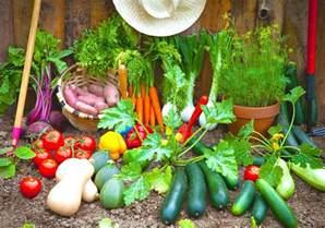 vegetable garden in home vegetable home garden plans for beginner gardener roy