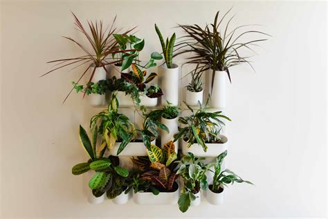 a vertical indoor wall garden before after by judith