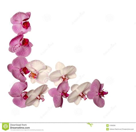 orchideen gestell orchid frame royalty free stock image image 4789306