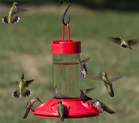 dr jb s clean 16oz hummingbird feeder all red