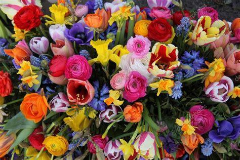bright colored flowers bright colored flower bouquet stock photo
