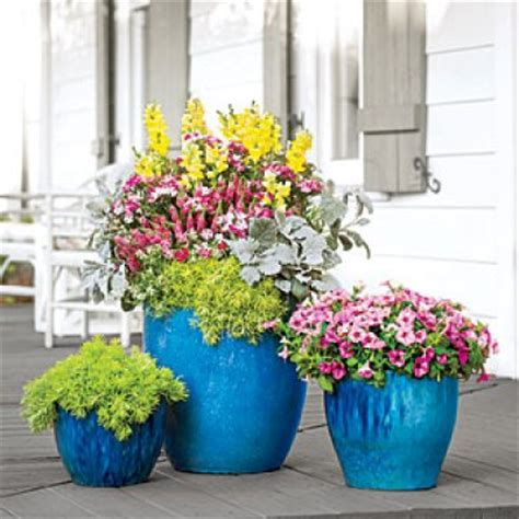 plant combination ideas for container gardens best flower combinations for containers