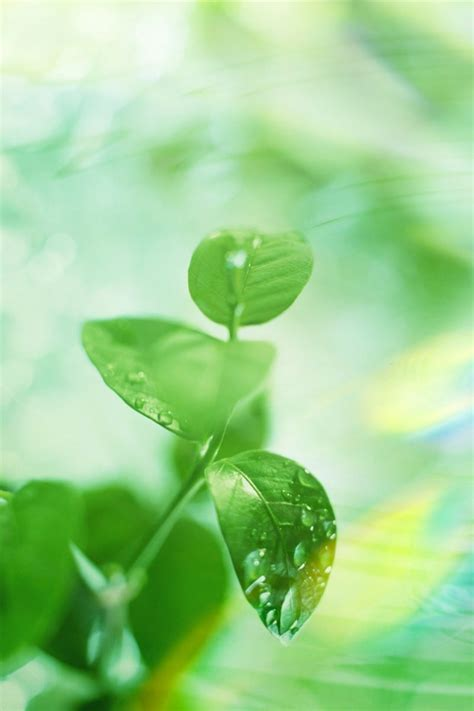 wallpaper iphone leaf iphone 4 leaf wallpaper 06 wallpapers nature wallpapers