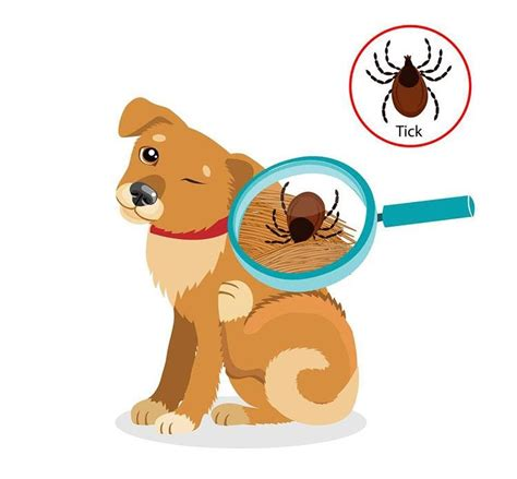 puppies and fleas welcome to your pet space