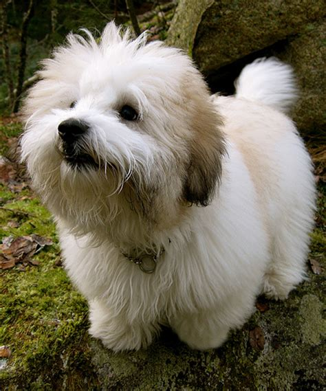 best dogs for with allergies classic article the best breeds for allergy sufferers reflections