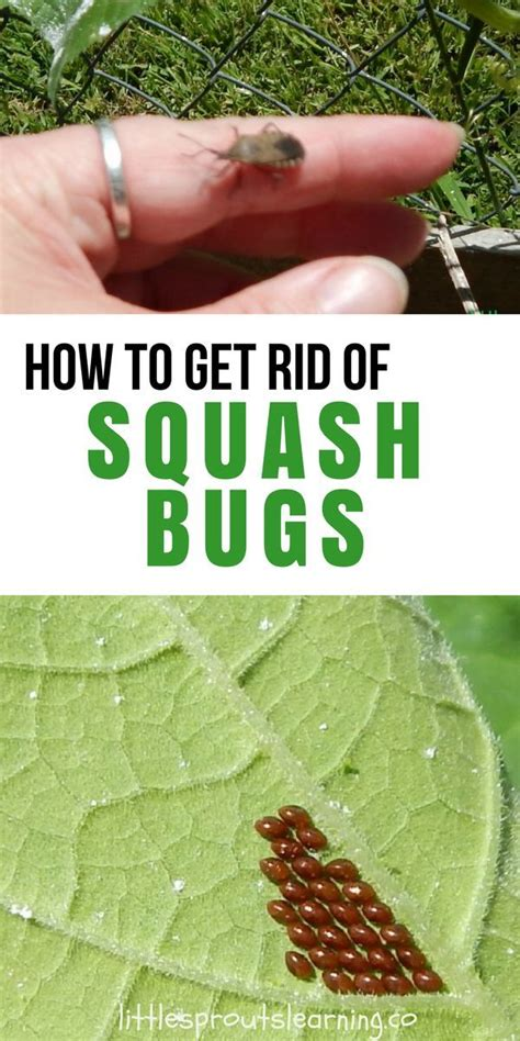how to get rid of backyard bugs 6907 best gardening for food images on pinterest