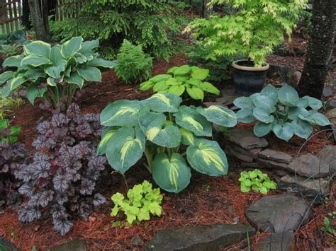 Shade Garden Ideas Contrasting Shade Garden Ideas Landscape Ideas Pinterest