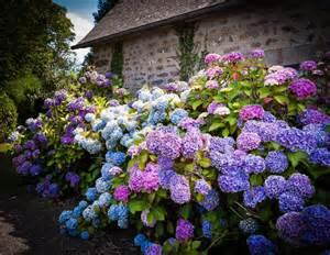 garten hortensie 35 hydrangea garden ideas pictures