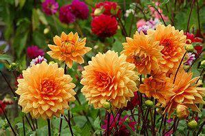 herbstblumen garten der garten im herbst herbstblumen pflanzen garten