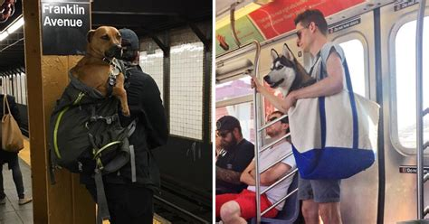 free puppies nyc nyc subway bans dogs unless they fit into a bag and new yorkers solution is
