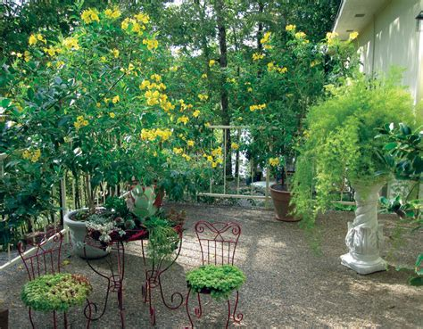 Garden Design With Pruning Plants More Commonly Grown As A Shrub You Can Also Prune Esperanza Up Into A Standard Tree Form If