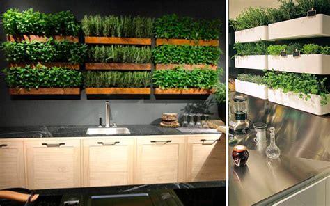 ideas creativas  plantas  tu cocina malatinta
