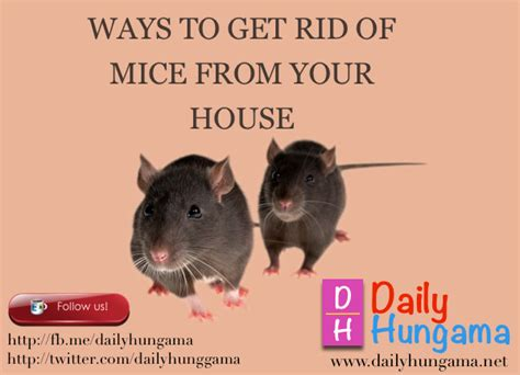 how to get rid of mice in kitchen cabinets dailyhungama