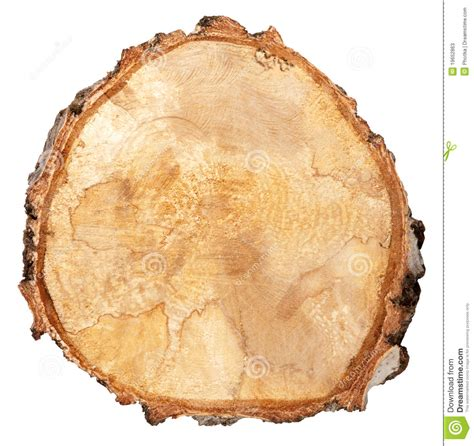 tree cross section cross section of a tree trunk stock photos image 19652863