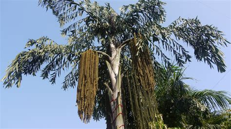 Best Home Design Blogs sri lanka s kithul palm syrup an ancient sweetener in