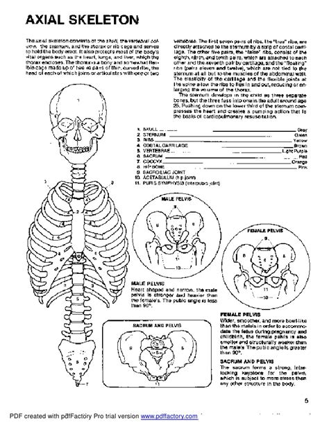 anatomy and physiology coloring workbook chapter 7 page 132 anatomy coloring book dover
