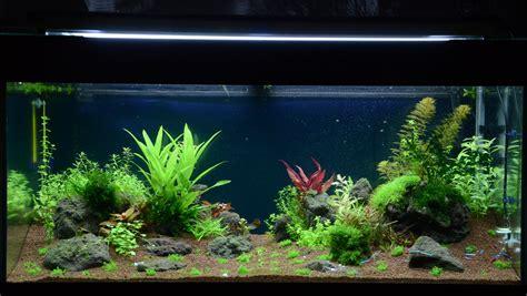 lada per piante indoor lade cfl lade cfl per acquario lada uv per