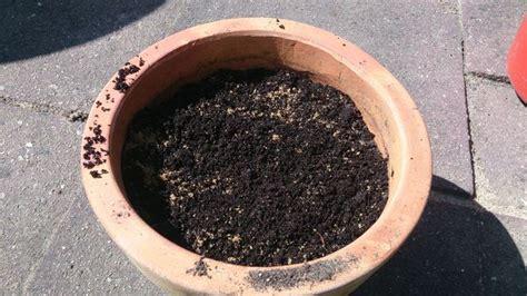 blumenzwiebeln im topf pflanzen blumenzwiebeln im topf so gedeihen sie