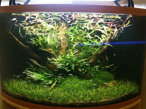 how to aquascape a planted tank how to scape a corner aquarium aquascaping aquatic plant central ideas for