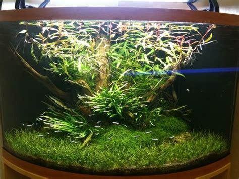 how to scape a corner aquarium aquascaping aquatic