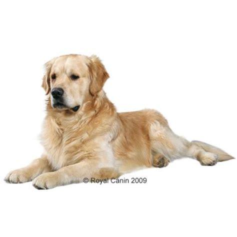 royal canin golden retriever 25 royal canin breed golden retriever 25 tanio w zooplus